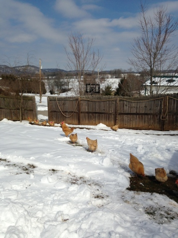 chicken path 2