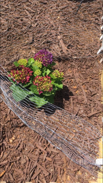 Backyard Blooming 16