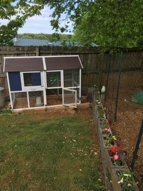 Backyard Blooming 5