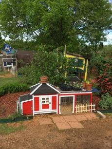 Backyard Blooming 9