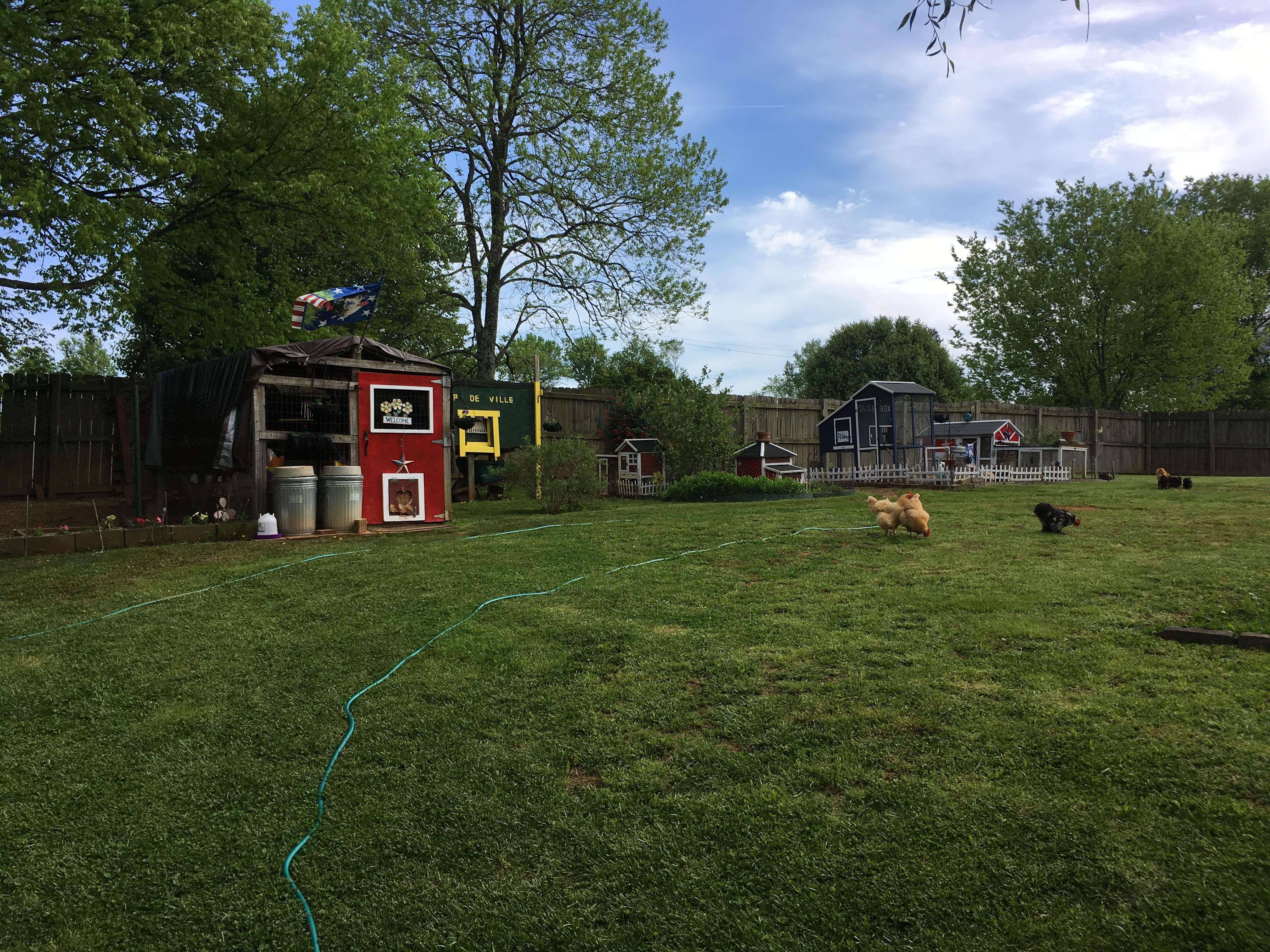 Backyard blooming 2