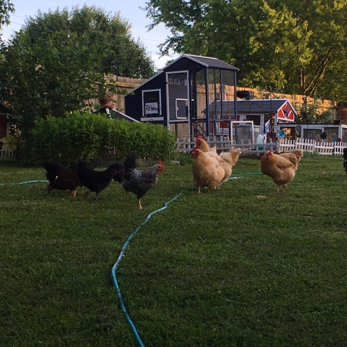evening with the flock 1