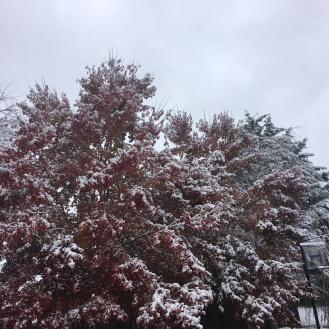 snow 3 2019